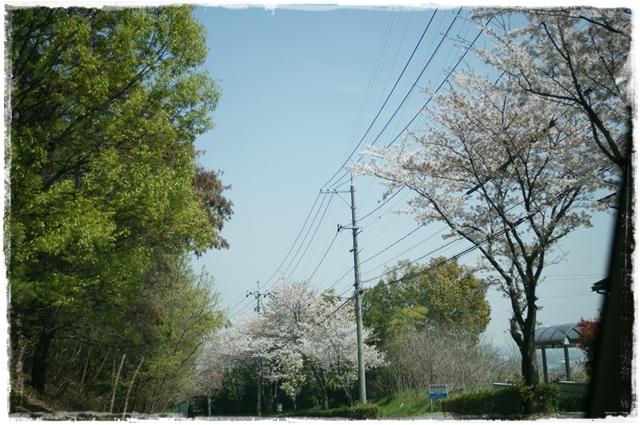 2011-4-14-4.JPG
