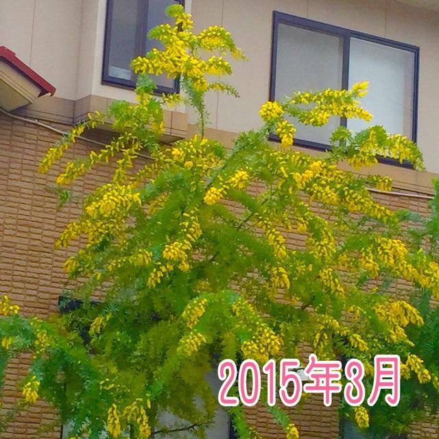 2015-3-29-6.JPG